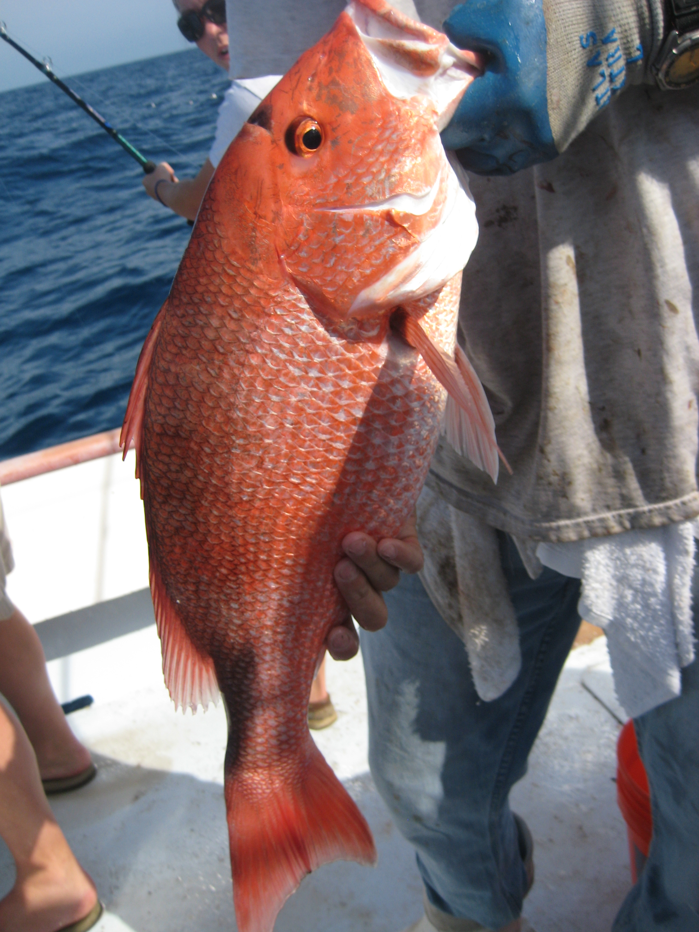Artificial Reef Types Affect Red Snapper Sizes – AFS